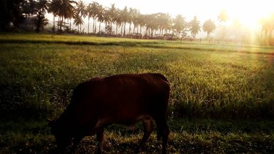 Cow standing on grass