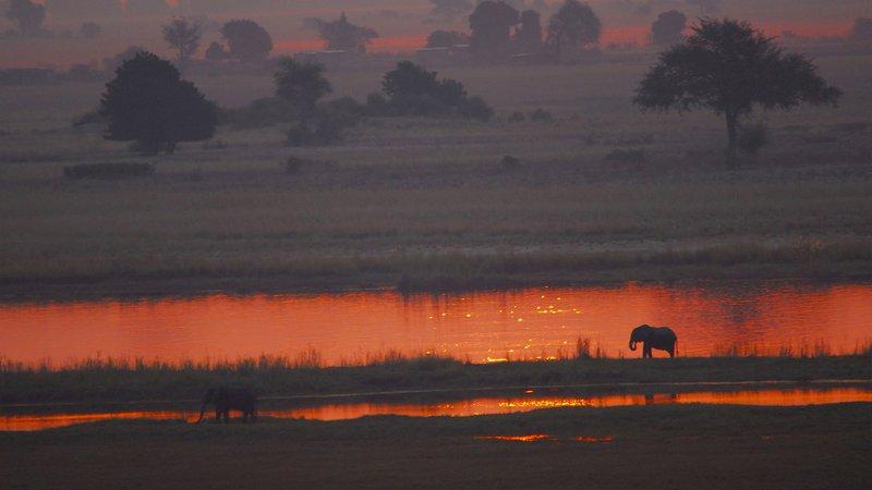 Elephants at sunset on the Okavango Delta