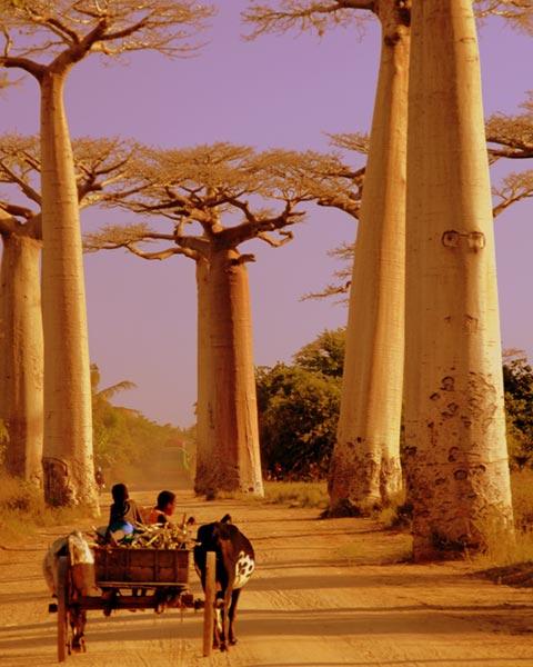 Winner - Julie Smith - Passeando pela Avenida dos Baobás