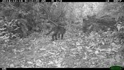 Seeing what's out there: Camera in traps in Paraguay