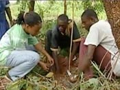 Environmental Videos on Youtube