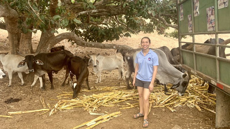 A young white woman in a Peace Corps branded shirt smiles in front of cows.