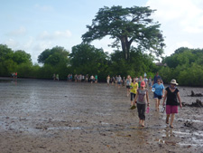 Senegal Peace Corps Volunteers and counterparts walk to the planting site