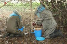 Ghanaian beekepers