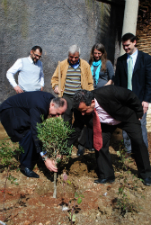 Planting an olive tree in Albania