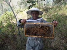 A local youth handles bees at the cooperative.