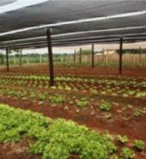 Garden in Paraguay