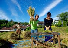 Peace Corps/Indonesia Volunteer Paige Gable wins first place in the photo contest category for providing technical assistance.