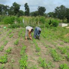 A Peace Corps volunteer in Senegal works alongside a farmer in his field