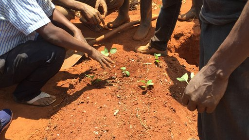 Discussing triangle planting method which allows for more seeds to be planted closer together.