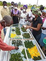 Participants at a food processing workshop in Mongu load a solar dryer with fruits and vegetables.