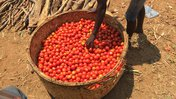 a basket full of red tomatoes