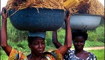 These women are returning from the fields carrying newly cut rice that they have harvested.