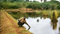 Konga Gaston Janvier, a lead farmer in the Pisciculture Intensive Program, is checking the water level of this barrage lake that he built with the help of two Peace Corps Volunteers in 1992. Flooding can destroy dikes during the rainy season.