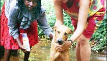 """""""Mamie"""" and Peace Corps Volunteer Karen McClish washing Pudge, the dog, at Belita's female bathing site. Males bathe in a separate area. This is also where women wash their clothes."""