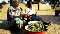 Kalfabe (on the left), 18, and Fooba, 19, cut and dry okra to save for the dry season. Okra, or gumbo, is added to all sauces to give a mucous consistency that makes it easier to scoop with the couscous.