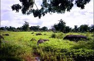 Ghana_water in Africa2