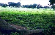 Ghana_water in Africa3