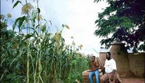 Mr. Haya, beside his son Dennis, admires the Guinea corn that he and his wife planted right next to their house. Farmers plant their crops around their homes and sometimes the crops grow so high that they camouflage the homes.