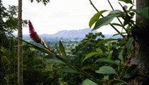 Krobo Mountain rises in the distance. Everything is in bloom during the rainy season.