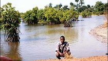 Ibrimah Dico pauses beside the River Gambia. Mangrove trees with protruding roots grow all along the river.
