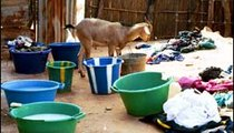A goat sneaks a sip of soapy water from the laundry area of this compound, where women do the weekly wash.