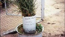 """The inscription on the plant container outside the NAMWATER headquarters says, """"Water is Life."""""""
