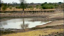 This is an oshana where water collects during the rains. Animals as well as people get their water here.