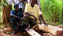 Mr. Mumba and his family cut planks from a log. With one man handling the saw from above and another from a pit beneath the log, they cut five planks in one day. They will use the planks to build a bridge.