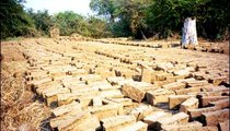 After bricks are molded, they are set out in the sun to dry. Pre-fired bricks such as these are then stacked to create an oven and fired.