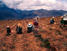 Latin American Adventure